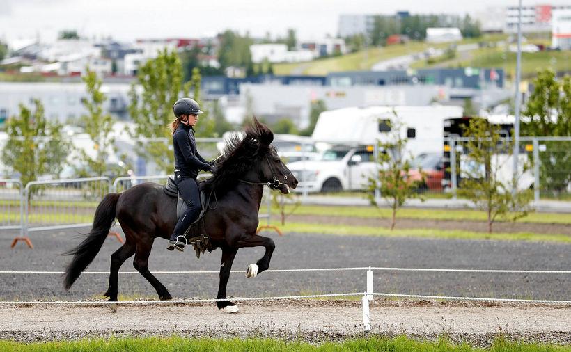 Hestur og knapi við æfingar á gæðingavellinum í gær.