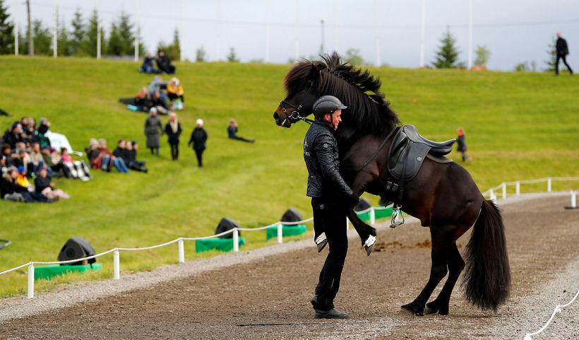 Knapi frá Vesturkoti fékk hest sinn til að sýna kúnstir.