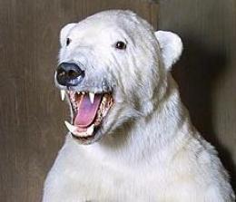 Ísbjörn er nú við bæinn Hraun á Skaga.