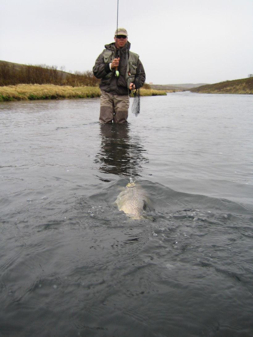 Stór urriði á leið í háfinn í Vörðuflóa.
