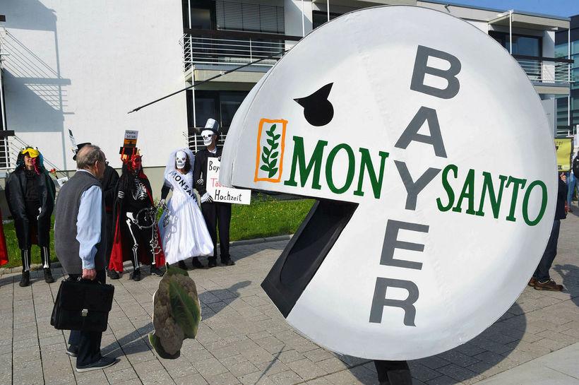 Umhverfissinnar hafa lengi fundið Monsanto flest til foráttu og hafa ...