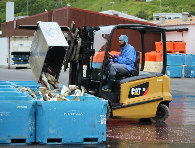 Fyllt í körin á bryggjunni á Suðureyri.