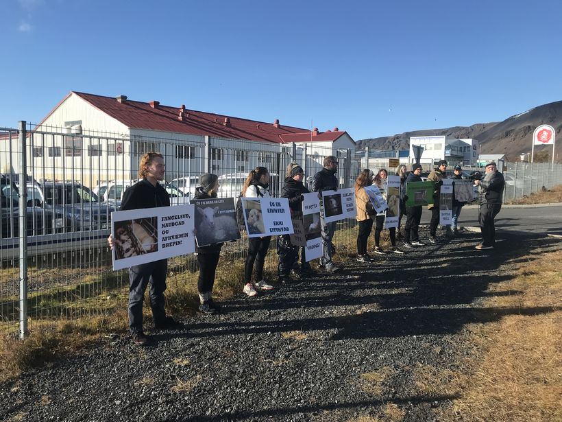 Animal rights acitivists outside the SS factory today.