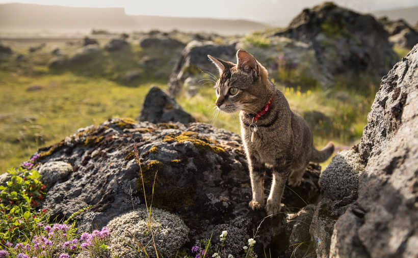 Pál in her natural environment: the beautiful Snæfellsnes peninsula in …