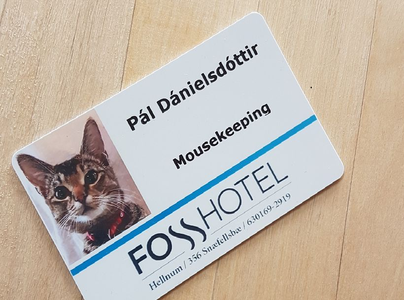 The photo of Pál's official staff card went viral last ...