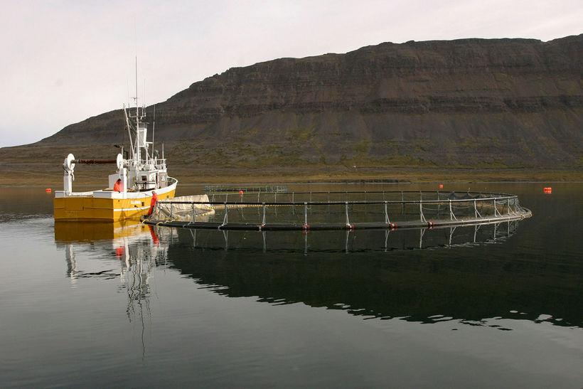 Fiskeldi í Súðavík.