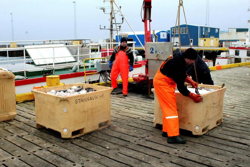 Aflanum landað í Grindavík.