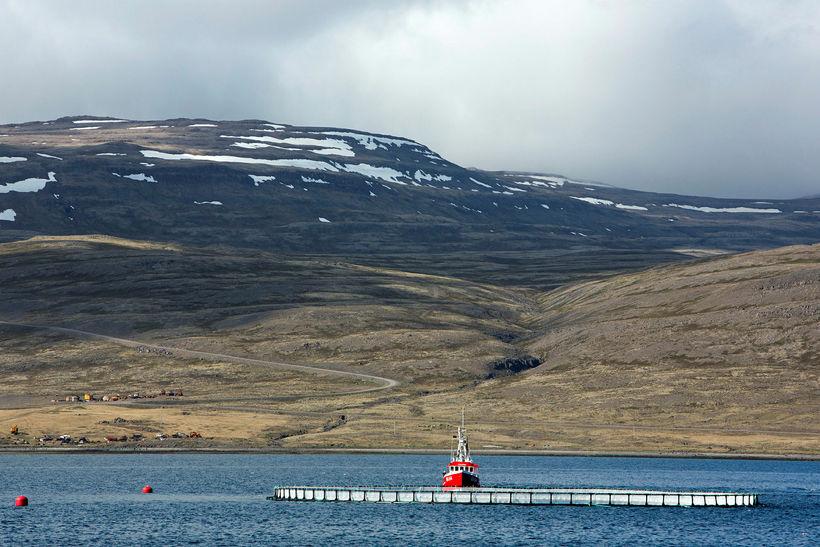 Sjókvíaeldi á Vestfjörðum.