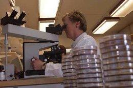Alls greindust 136 salmonellatilfelli á sýklafræðideild LSH á síðasta ári.