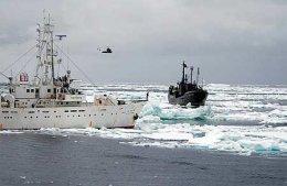 Skip Sea Shepherd samtakanna, Farley Mowat, sést hér nálgast japanskt ...