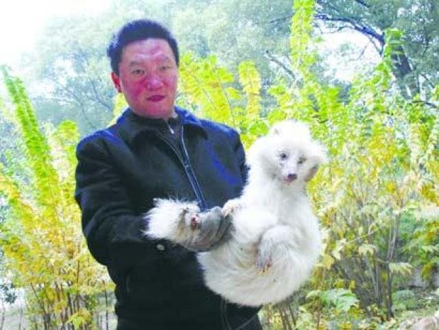 Zhang með hinn alhvíta
