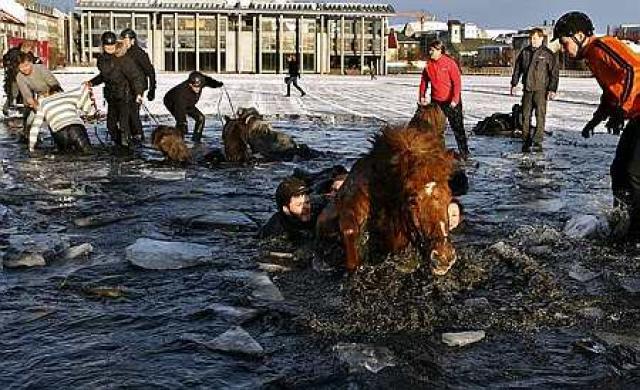 Hestamenn sýndu mikla hreysti við björgun hestanna úr vökinni.