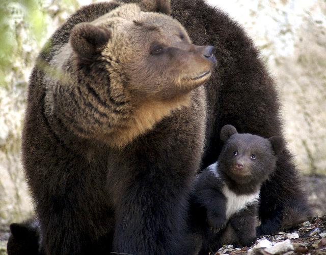 Ertu björn?