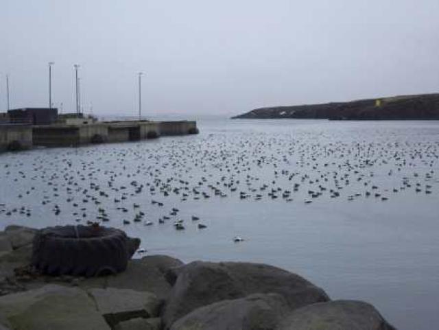 Helguvíkurhöfn er erfið fyrir rekstur Reykjanesbæjar.