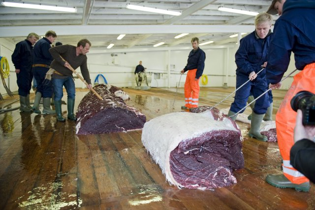 Icelandic whalers cutting meat from a 35-tonne fin whale.