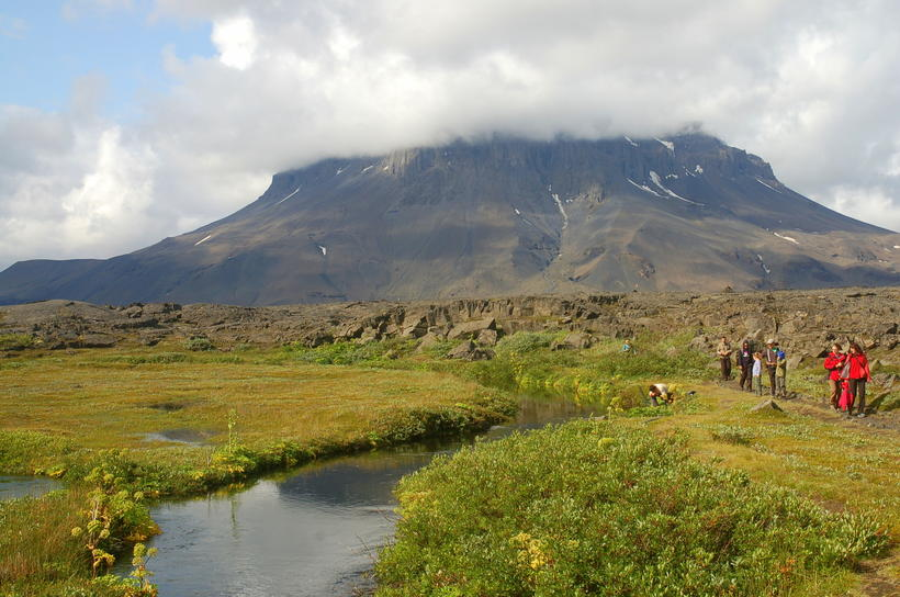 Ferðafólk á gróskumiklum bökkum Herðubreiðarlinda.