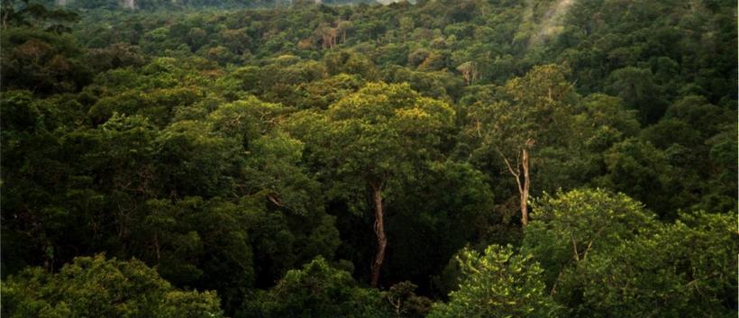 Frá Amazon regnskóginum.