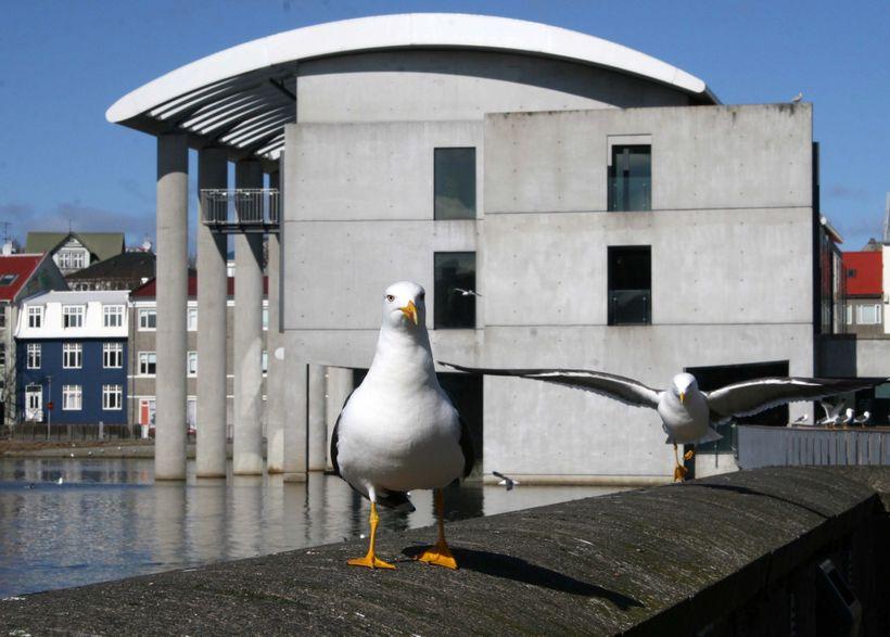 Reykjavik City Council.