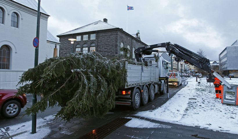 Last year's damaged tree being driven away.