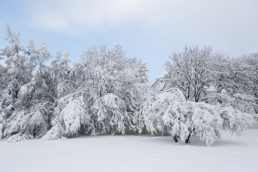 The beauty of the all-encompassing white blanket of snow.