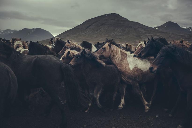 Frá dónmefnd: Serían sýnir á mjög raunsæjan hátt hvernig hestaréttir ...