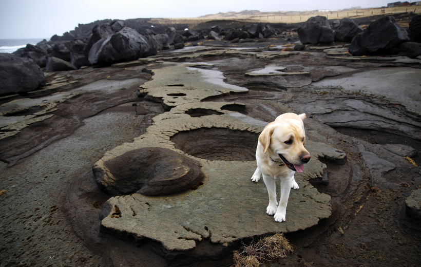 A dog exploring the islands' volcanic landscape.