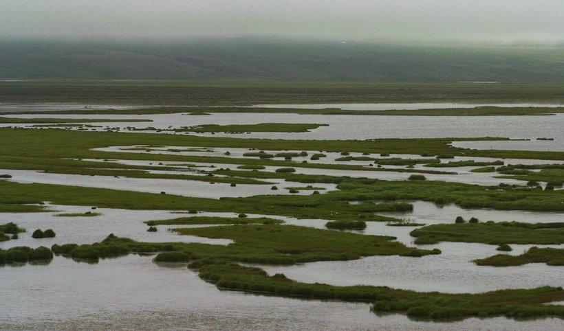 Fuglafriðland við Héraðsvötn.