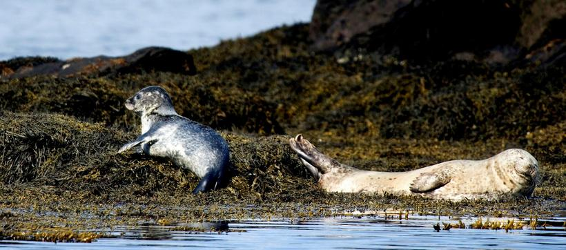 There have been numerous research on the seals that linger ...