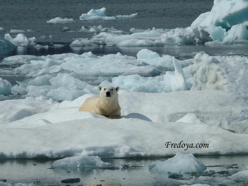 This polar bear spotted the boat and wanted to climb ...