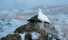 Veiðidögum er nú fjölgað í 22 og hefst tímabilið 1. nóvember. Ráðherra tilkynnti þetta fyrir stundu.