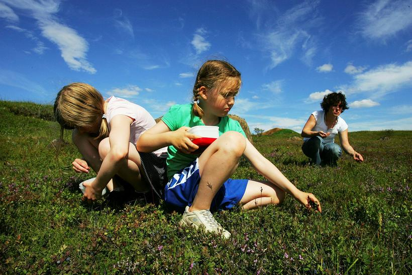 Children picking berries in Biskupstungur, South Iceland.