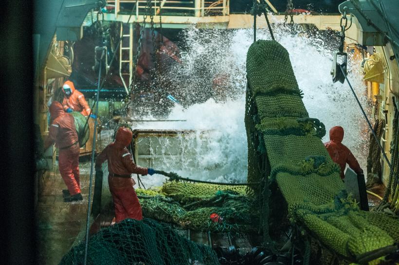 Sailors bringing in the fish.