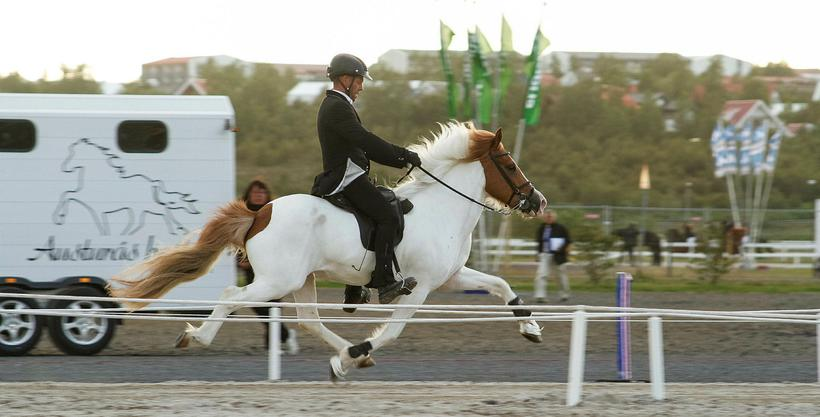 "Riding a horse in the ""skeið"" or flying pace is ..."