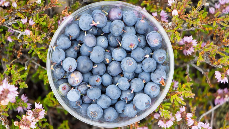 Blueberries are extremely healthy.