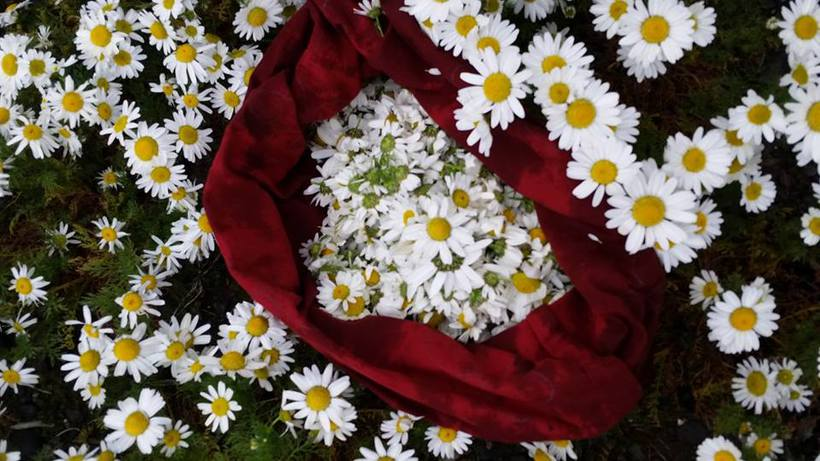 Mayweed is one of the herbs found in Pure Natura's ...
