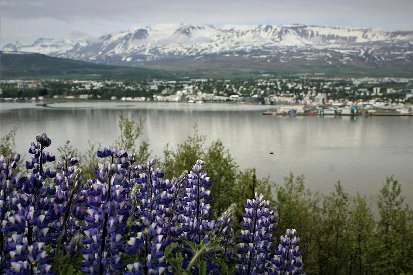 29% af heildarfjölda erlendra ferðamanna sem komu til Íslands árið ...
