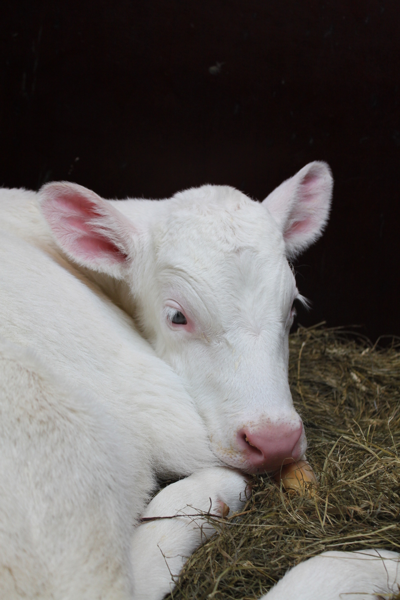 Cream was born last Wednesday.