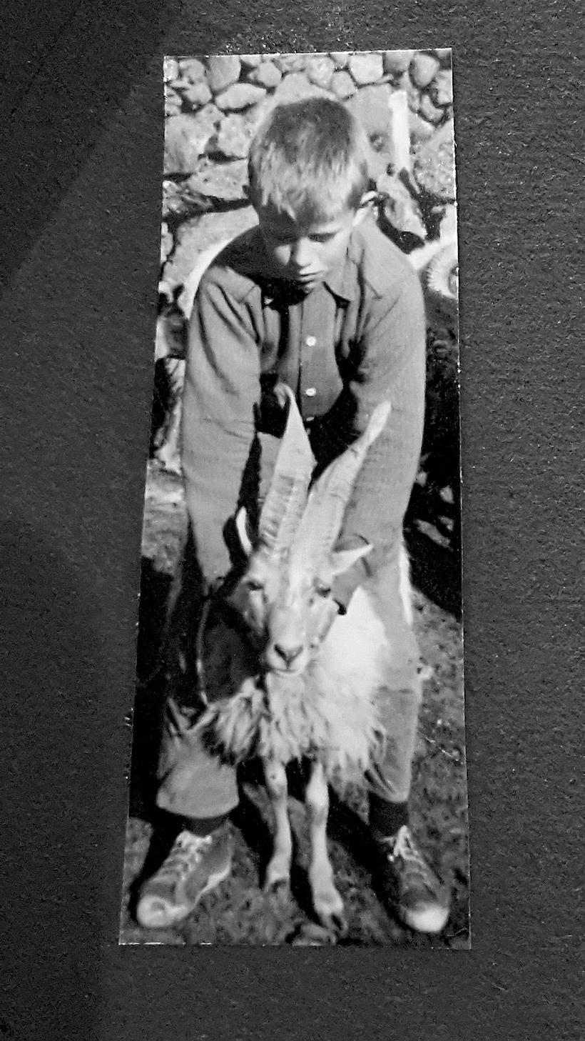 Halldór Árnason with a ram in 1961.