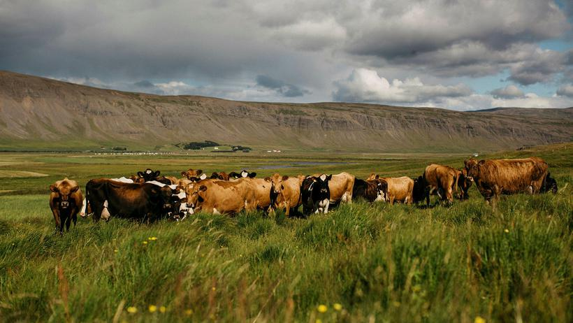 Kjós is a lush farm area of Iceland, west of ...