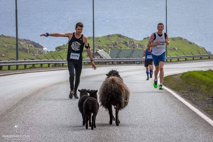 500 manns tóku þátt í Þórshafnarmaraþoninu í júní þar sem …