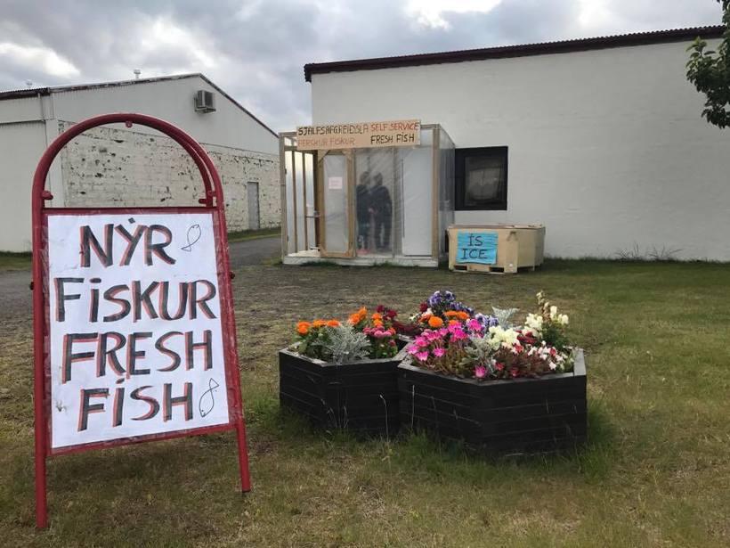 Fresh fish in Tálknafjörður.