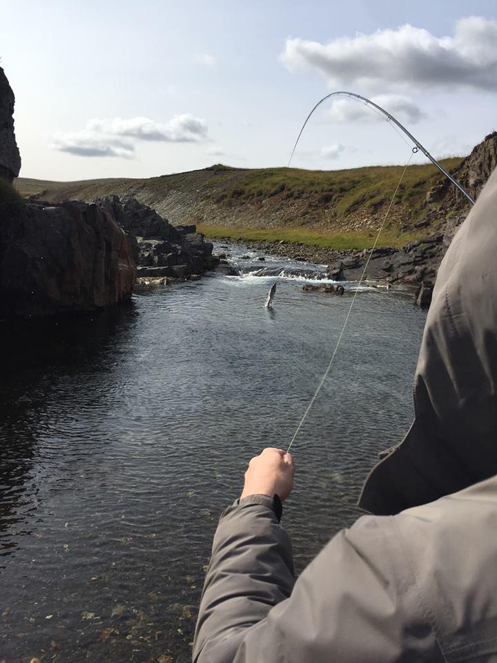 Glimt við lax í Miðfjarðará. Hún gaf 168 lax síðustu …