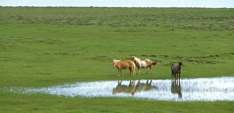 Farmland in Biskupstungur.