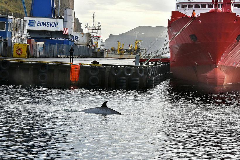 Andarnefjan í Friðarhöfn í Vestmannaeyjum.