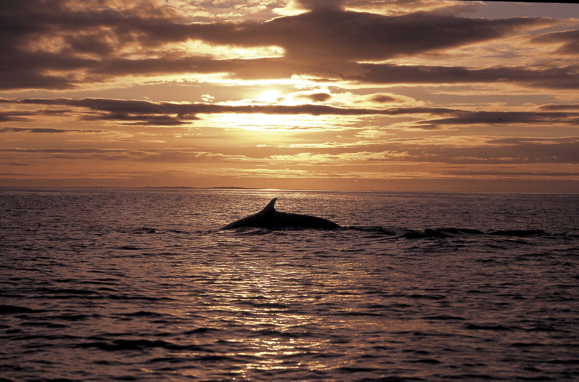 Whale Watcing from Reykjavik