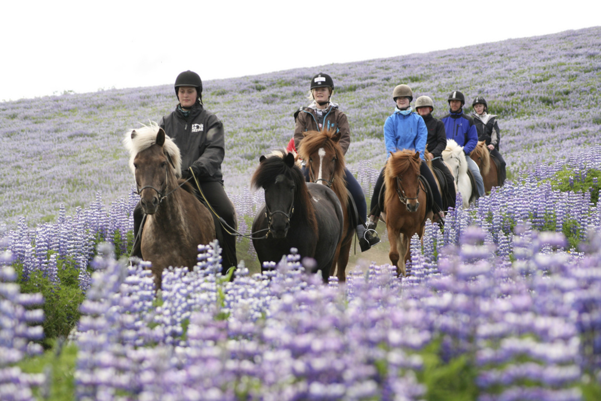 Lava Tour on Horseback